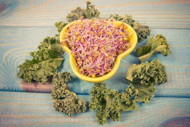 Brotos e folhas da couve como um ingrediente de uma dieta saud?vel imagens de stock