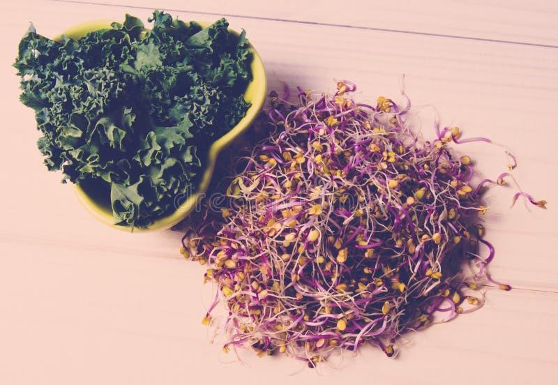 Brotos e folhas da couve como um ingrediente de uma dieta saud?vel imagem de stock