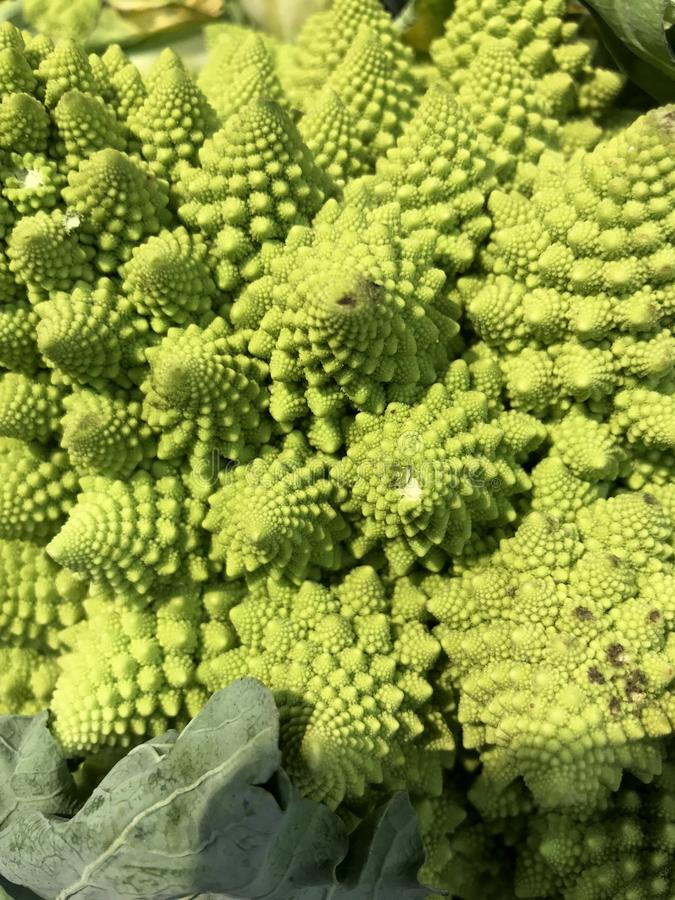 Brotos espirais da couve-flor verde fresca foto de stock royalty free