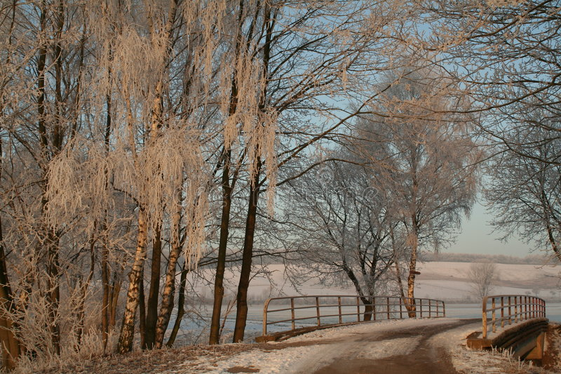 Download Brotrees under fotografering för bildbyråer. Bild av bricked - 501081