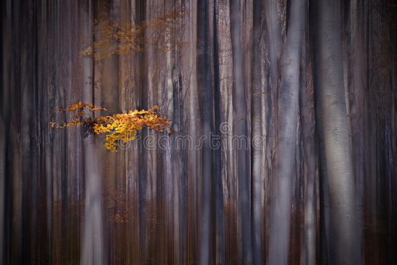 Brouillard à l'arrière-plan mystique coloré par forêt Papier peint artistique magique de forêt magique fairytale Rêve, ligne Arbr photographie stock libre de droits
