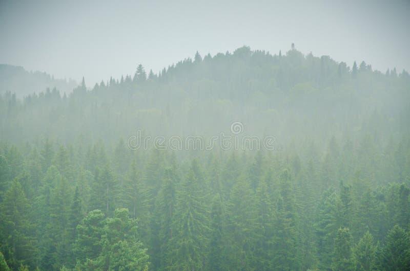 Download Brouillard épais De Matin Dans La Forêt D'été Image stock - Image du environnement, profondément: 76085741