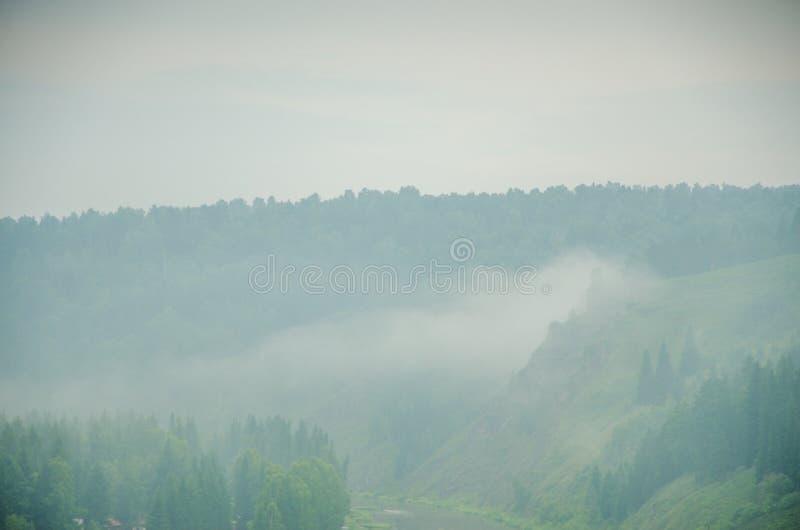 Download Brouillard épais De Matin Dans La Forêt D'été Image stock - Image du crépuscule, puissant: 76086059