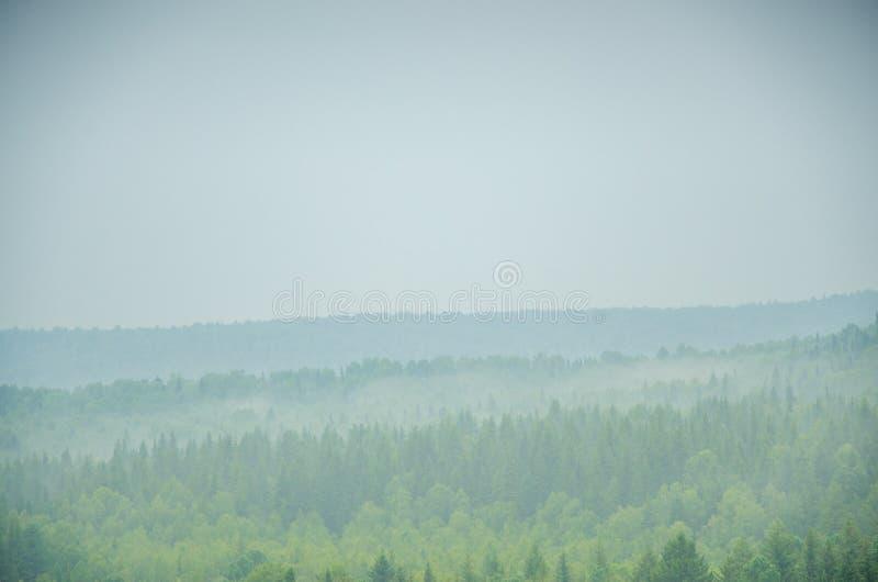 Download Brouillard épais De Matin Dans La Forêt D'été Image stock - Image du nuages, horizontal: 76086969