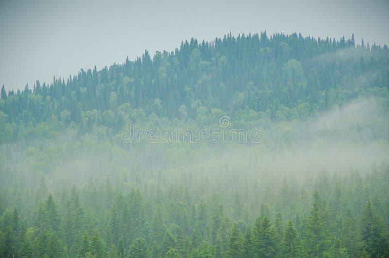 Download Brouillard épais De Matin Dans La Forêt D'été Photo stock - Image du mystérieux, pointeaux: 76087230
