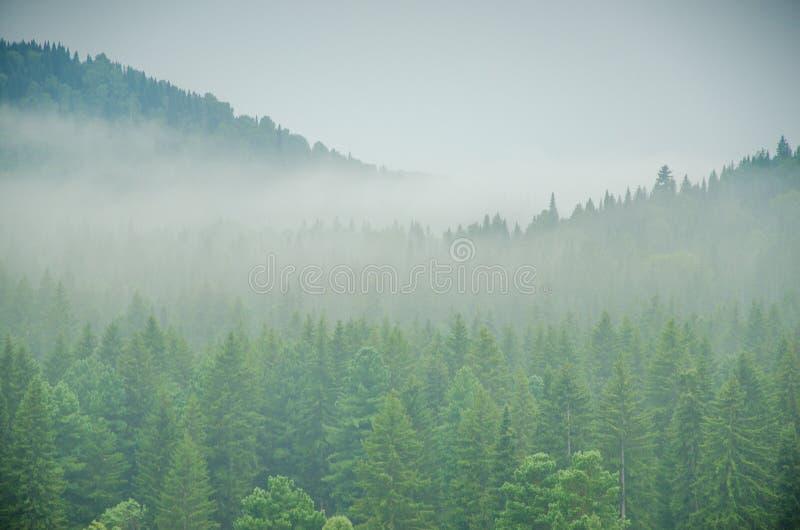 Download Brouillard épais De Matin Dans La Forêt D'été Image stock - Image du obscur, brume: 76087337