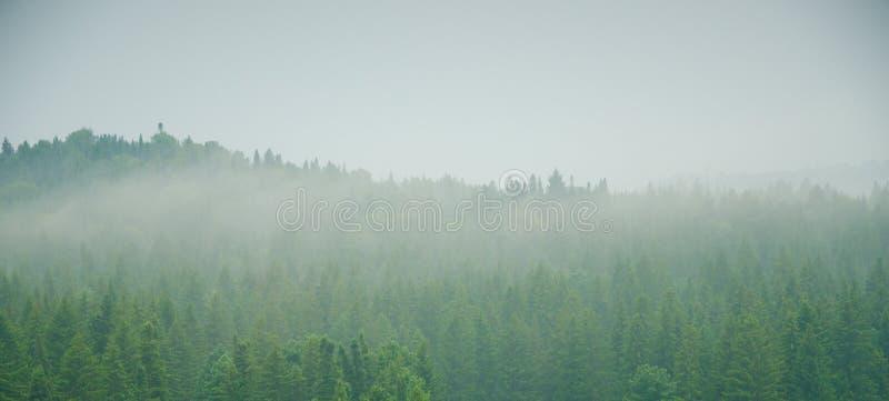 Download Brouillard épais De Matin Dans La Forêt D'été Image stock - Image du pointeaux, montagne: 76087807