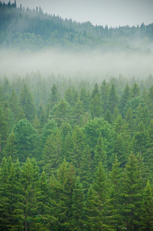 Download Brouillard épais De Matin Dans La Forêt D'été Image stock - Image du nébuleuse, sinistre: 76088107