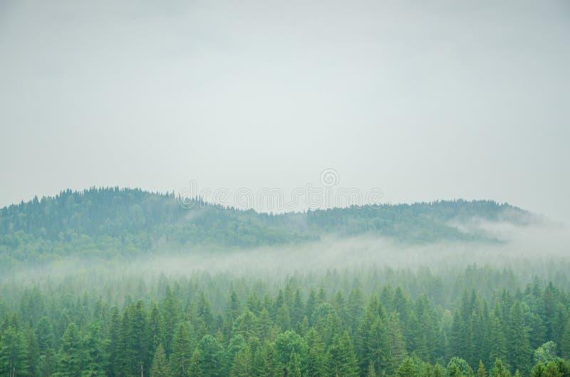 Download Brouillard épais De Matin Dans La Forêt D'été Image stock - Image du horizontal, profondément: 76088637