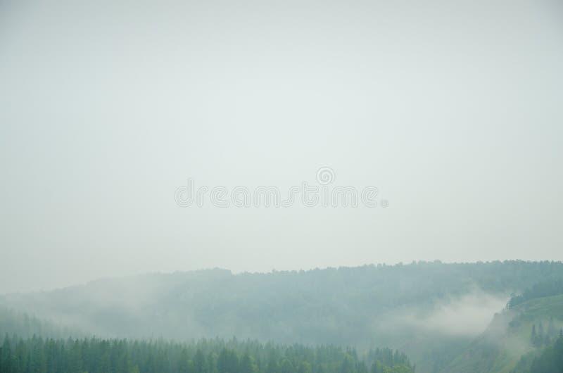 Download Brouillard épais De Matin Dans La Forêt D'été Image stock - Image du dense, nuages: 76088893