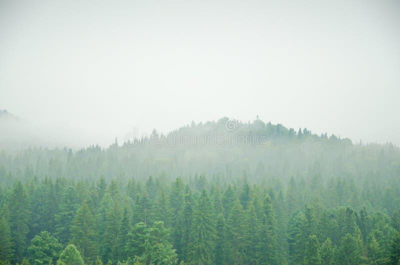 Download Brouillard épais De Matin Dans La Forêt D'été Image stock - Image du cordon, pointeaux: 76088949