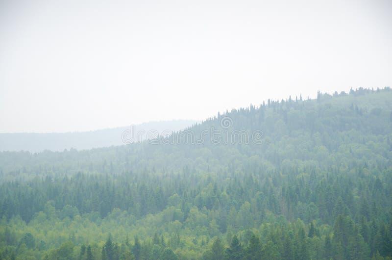 Download Brouillard épais De Matin Dans La Forêt D'été Image stock - Image du sinistre, nuages: 76089371