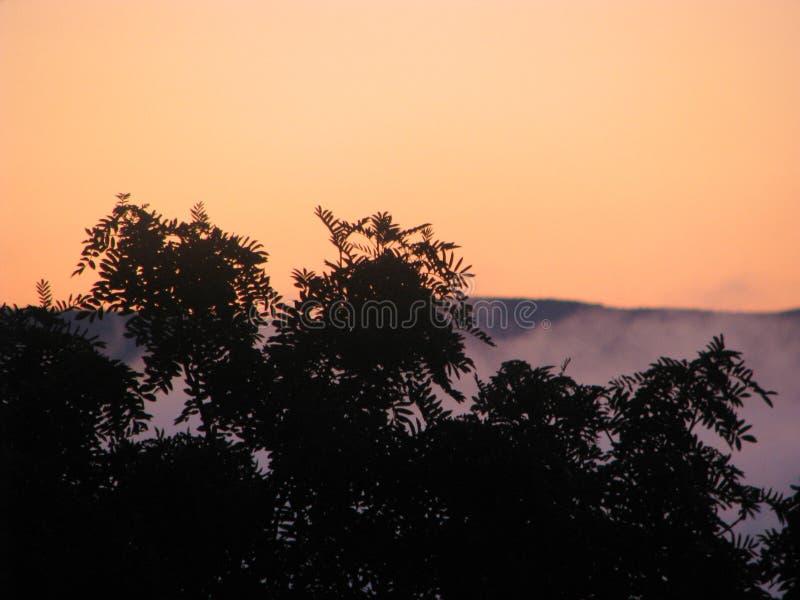 Brouillard étrange image stock
