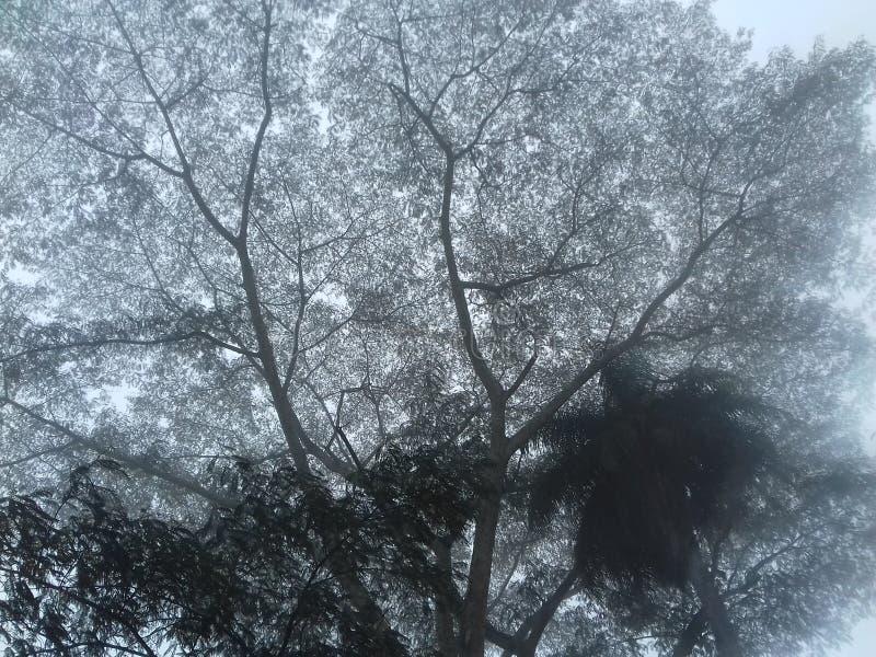 brouillard, arbre, après-midi pluvieux photos stock