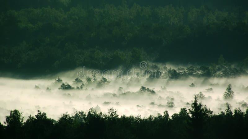 Brouillard au-dessus de forêt photographie stock
