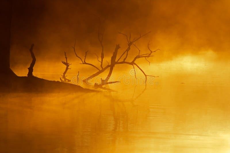 Brouillard au-dessus de l'eau photo libre de droits