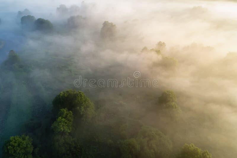 Brouillard au-dessus de pré images stock