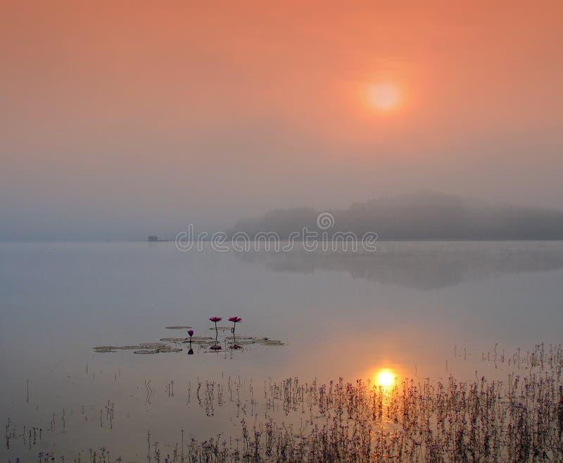 Brouillard au-dessus du lac au lever de soleil photos libres de droits