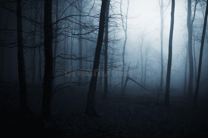 Brouillard bleu dans la forêt foncée effrayante photographie stock libre de droits