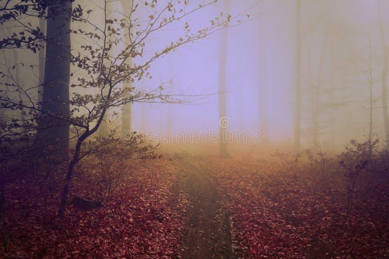 Brouillard coloré étrange pendant un jour d'automne dans la forêt photo libre de droits