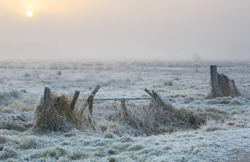 Brouillard d'hiver image libre de droits