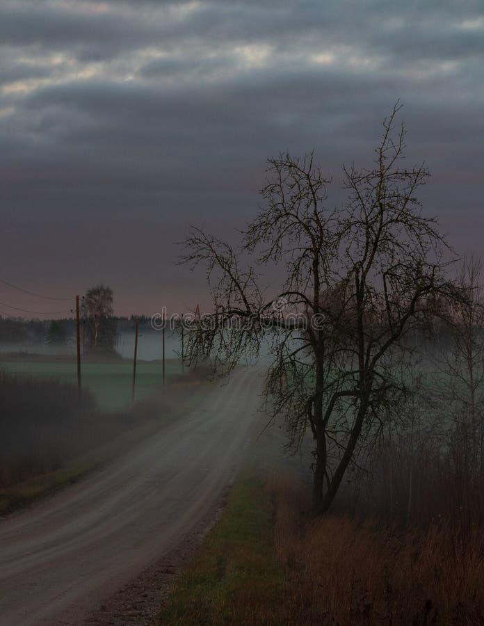 Brouillard dans la distance, et un arbre de hantise du côté droit image libre de droits