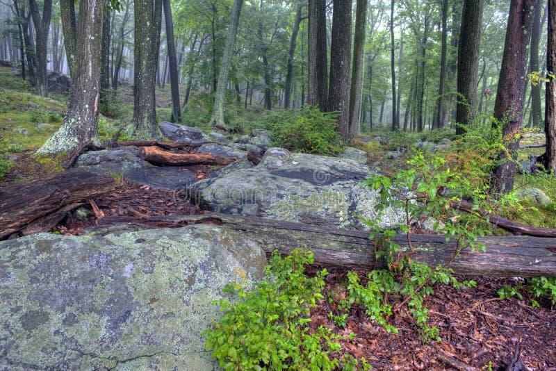 Brouillard dans la forêt image libre de droits