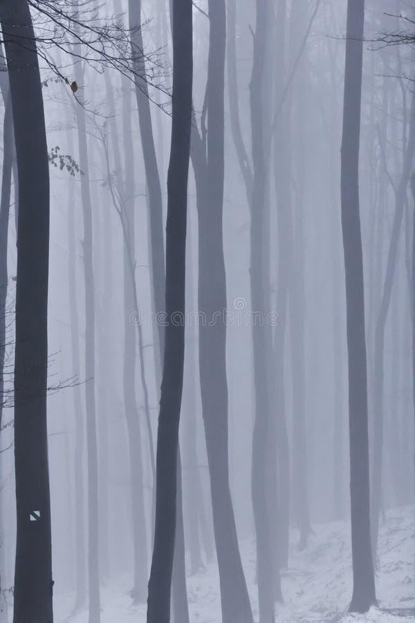 Brouillard dans la forêt photo libre de droits
