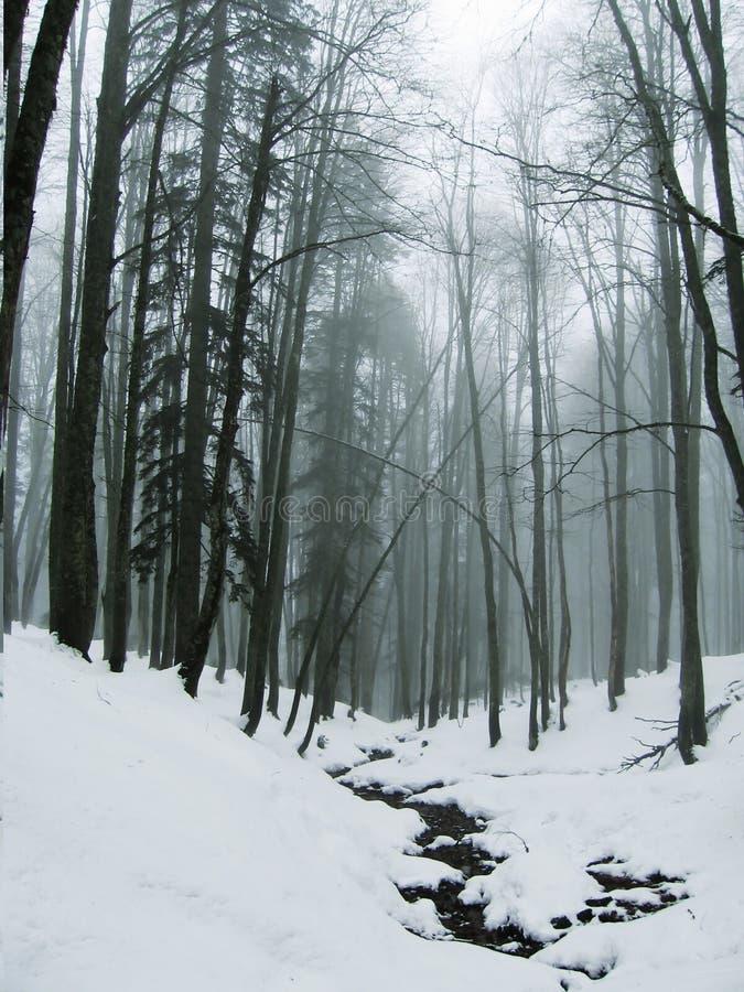 Brouillard dans la forêt de l'hiver photo libre de droits