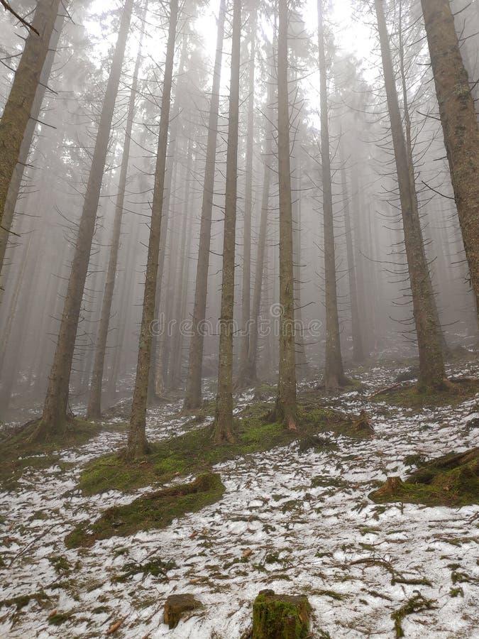 Brouillard dans la forêt neigeuse de sapin à la colline images libres de droits