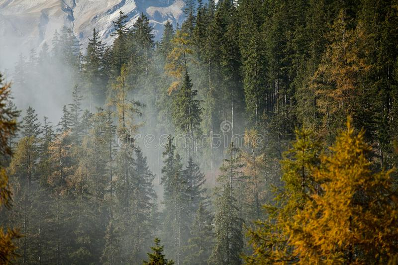 Brouillard dans les bois photographie stock