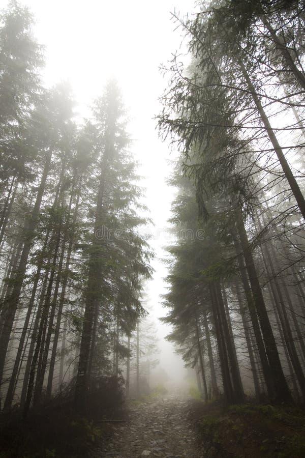 Brouillard dans Tatras image libre de droits