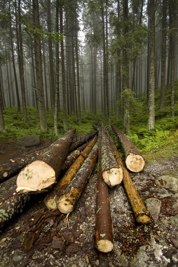 Brouillard dans Tatras photographie stock