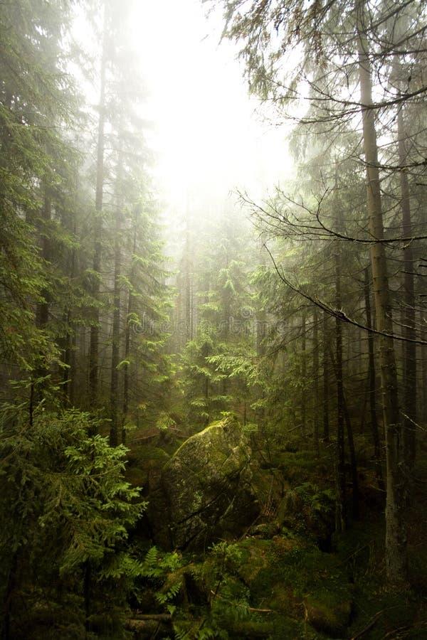 Brouillard dans Tatras photo stock