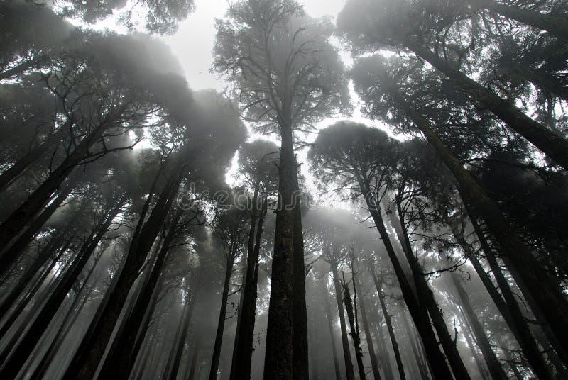 Brouillard dans une forêt images stock