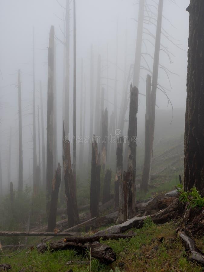 Brouillard dans une forêt brûlée images libres de droits
