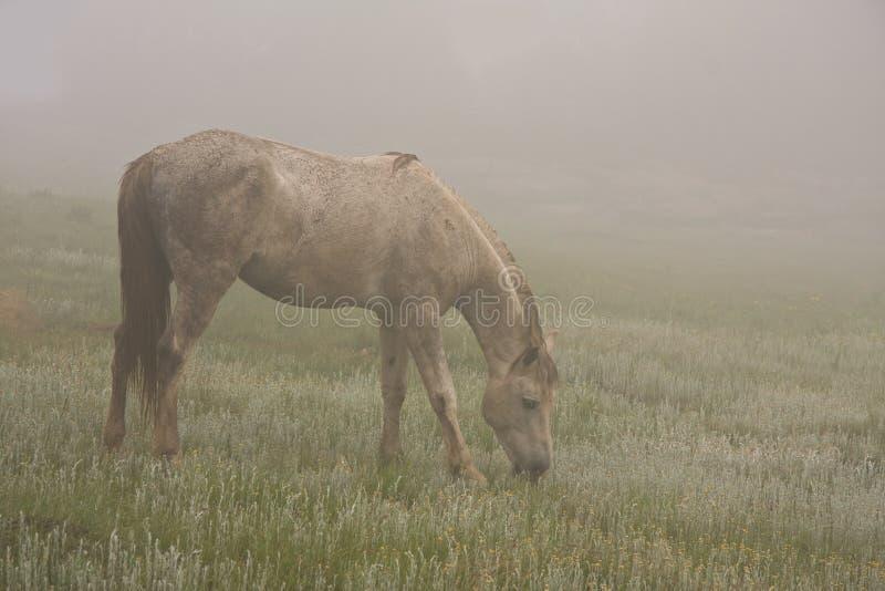 Brouillard de cheval sauvage photographie stock libre de droits