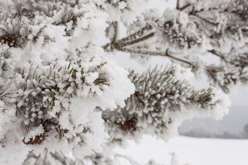 Brouillard de congélation sur des arbres Glaçage sur les branches des pins Matin froid dans la campagne Paysage rural dans la Rép photographie stock
