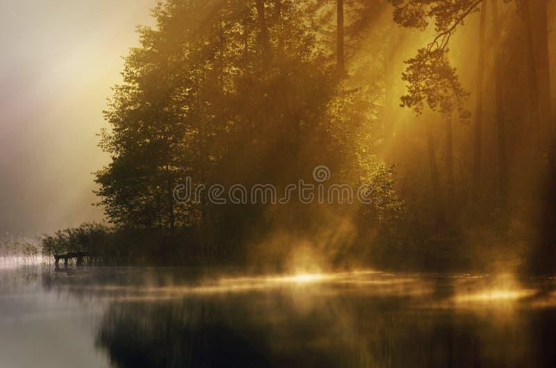 Brouillard de début de la matinée photo libre de droits