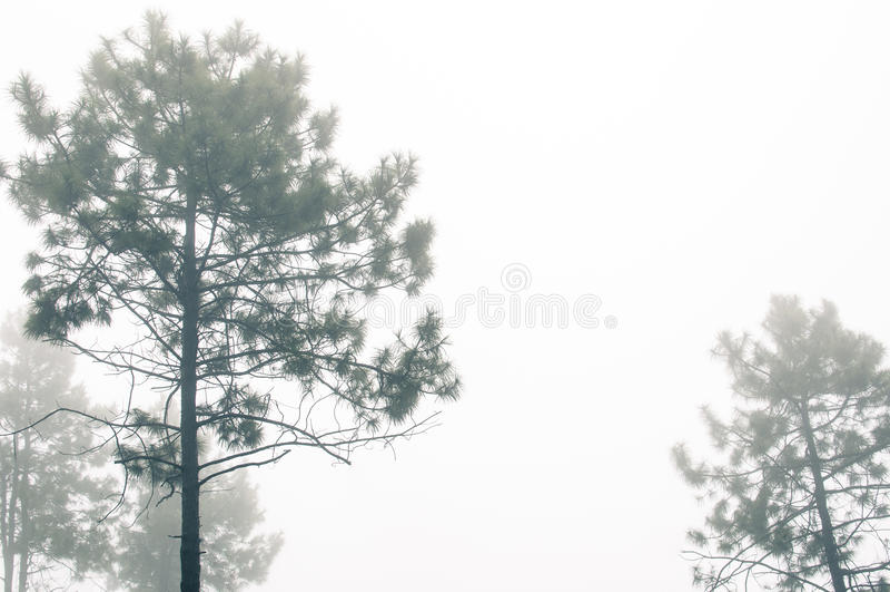 Brouillard de flottement images libres de droits