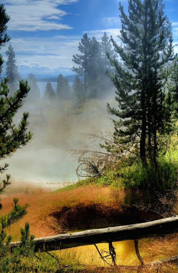 Brouillard de forêt photo stock
