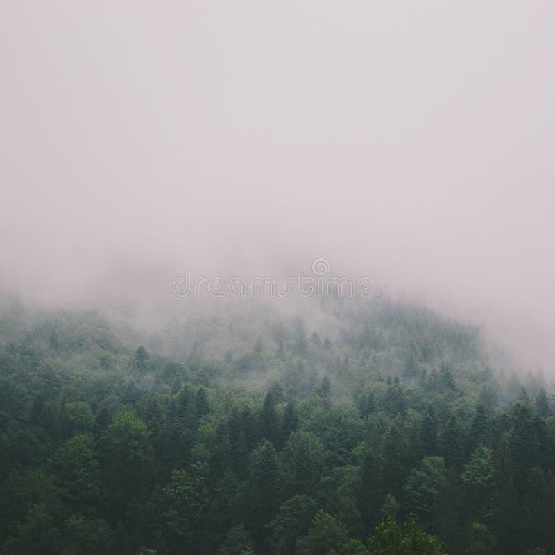 Brouillard de forêts de montagnes photo stock