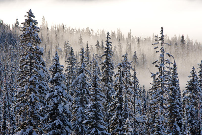 Brouillard de l'hiver photos libres de droits
