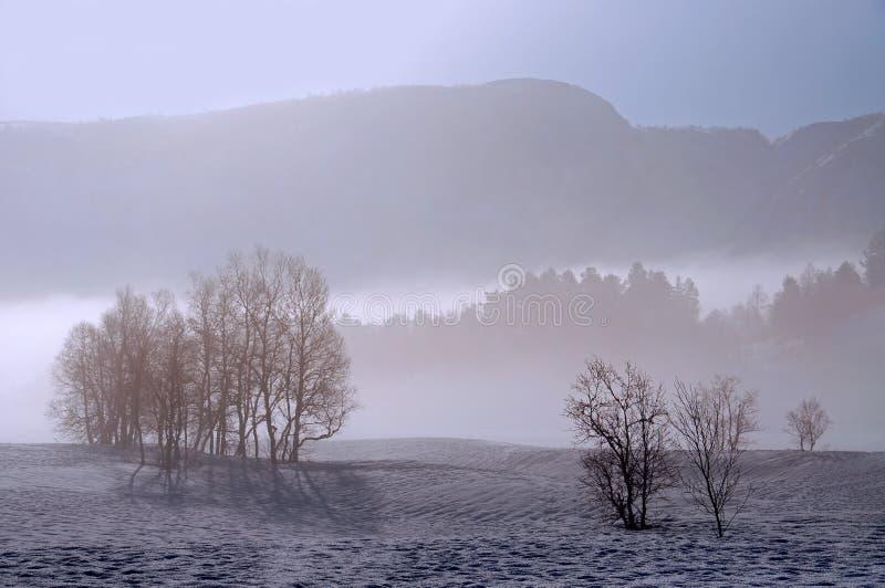 Brouillard de l'hiver photographie stock