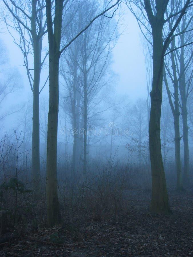 Download Brouillard de l'hiver photo stock. Image du arbres, bleu - 55588