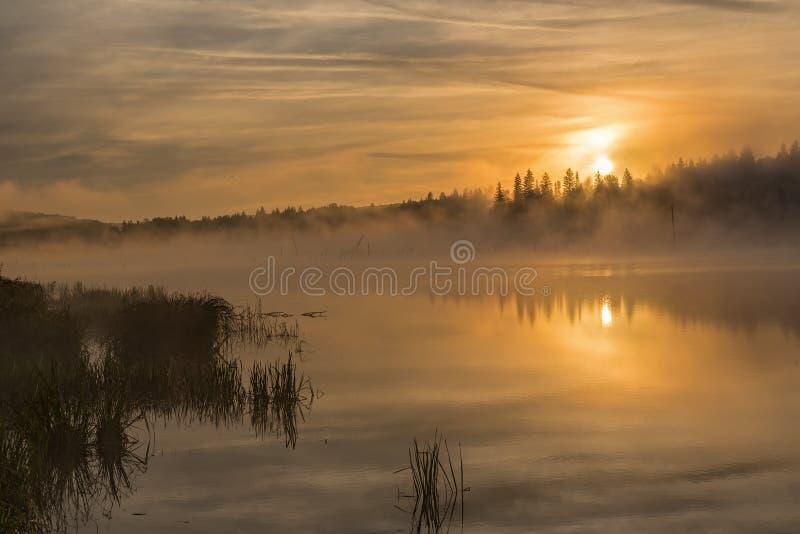 Brouillard de lever de soleil de lac d'or images stock