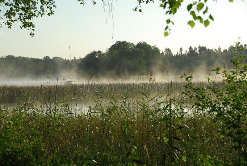 Brouillard de matin photos stock