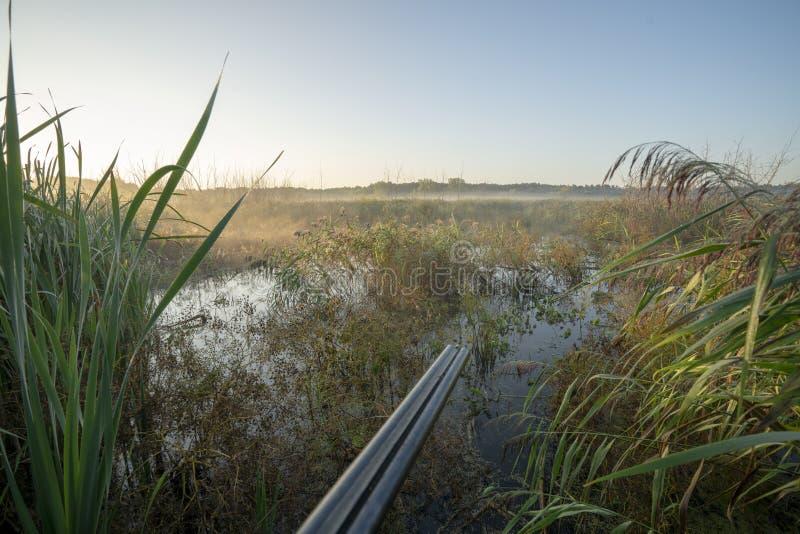 Brouillard de matin, chassant pour le gibier à plumes image libre de droits