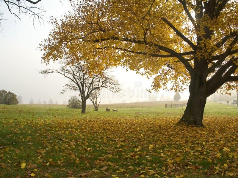 Brouillard de matin d'automne photos stock