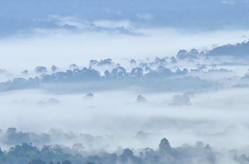 Brouillard de matin dans la forêt tropicale tropicale dense au parc national de Khao Yai image stock
